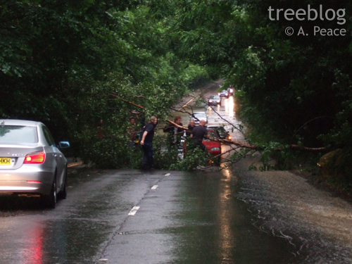 tree blocking road