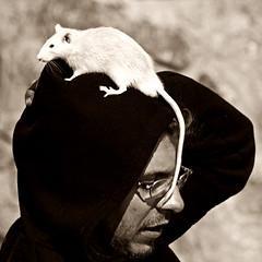 pán s krysou