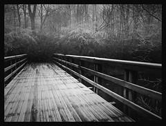 Crossing (Kirsten M Lentoft) Tags: bridge bw mist forest denmark bravo frost glostrup infinestyle vestvolden photosexplore kirstenmlentoft miasbest
