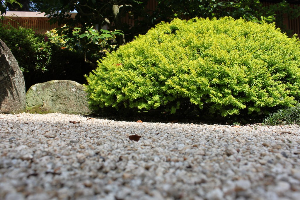 A Japan photo No.158:Hydrangea Walk(AJISAI) in Kamakura