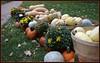 a bountiful harvest........ (bonnie5378) Tags: autumn friends pumpkins harvest mums squash blueribbonwinner outdoormarket oct10 anawesomeshot canadianfemalephotographer natureselegantshots