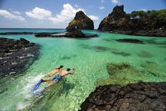 Snorkel nos Porcos (Joo Vianna) Tags: nature de dolphin natureza dolphins fernando fernandodenoronha joao noronha vianna whbrasil joaovianna