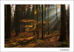 Autumn Sun (Tobias Neubert Photography) Tags: autumn trees sun tree fall forest canon herbst tschechien tschechischerepublik czechrepublic 1020mm 1001nights sunrays leafs sonne wald bltter bume baum sonnenstrahl sonnenstrahlen sunray 2010 sigma1020mm sigma1020 broumov sigma1020mmf456exdchsm 550d mywinners canoneos550d tripleniceshot 1001nightsmagiccity mygearandmepremium mygearandmebronze mygearandmesilver mygearandmegold eos550d mygearandmeplatinum mygearandmediamond eosdigitalrebelt2i broumovuzadnhochodova