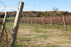 Laurel Lake Vineyards 3165 Main Road Laurel, NY 11948 (moonman82) Tags: music island vineyard vines wine country vine longisland winery vineyards grapes horticulture grape long vino viticulture tastin