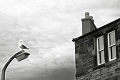 la mouette (oxximoron) Tags: sky bw window clouds europe streetlamp stones seagull streetphotography nikond70s nb ciel nuages mouette urbanwalk mywinnersgroup promenadeurbaine nikonafsdx architectureinedinburgh