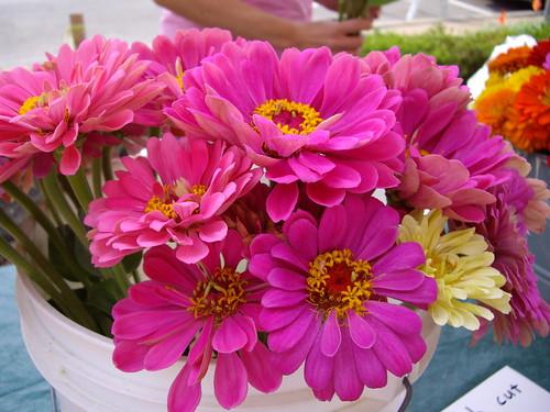 flowers062307