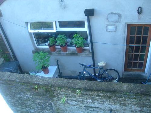 plants-next-door