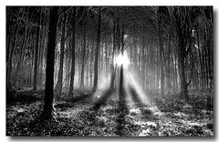 Blairwitch Project (Rodrigo da Cunha) Tags: trees ireland irish white mist black fog forest landscape blackwhite gothic blairwitch flickrsbest thegoldenmermaid