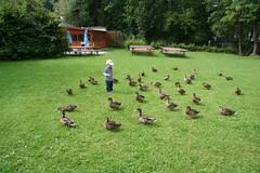 Moritz füttert Enten