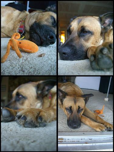 Lola resting