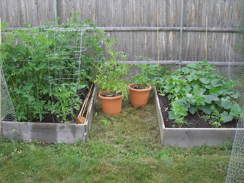 tomatoes and cukes