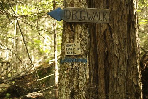 Willoughby Bog Hike (17)
