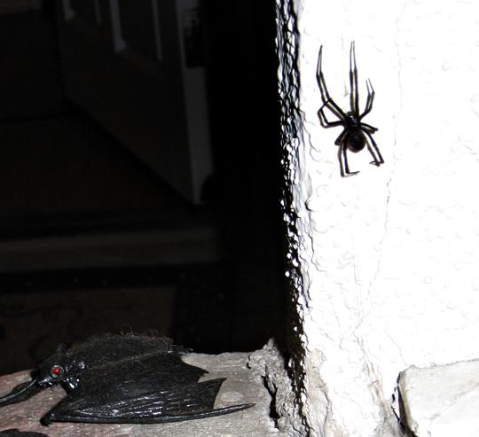 black widow spider+halloween decor and real decor
