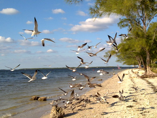 Frenzy on the Sanibel Island Causeway