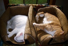 Tandem Cat Napping - Cat Olympic Sport (Gail S) Tags: pinky thepuss catswindows cwcc catbedscondos cwccbeds