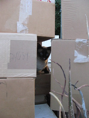 Joey hides in the boxes