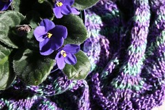 silk chevron and violets