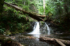 Upper Cascade Falls (novatrust) Tags: trees water river waterfall rocks orcasisland ferns sanjuanislands fallentree moranstatepark