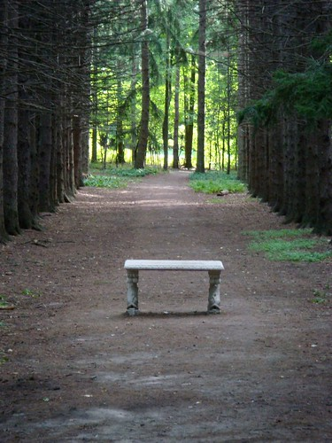 Guest Shot: Bench in Clearing