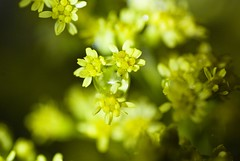 (summerrunner) Tags: flower macro floral nikon bokeh taipei 60mm nikkor 花 生活 d80 mywinners platinumphoto theperfectphotographer