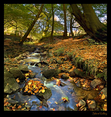 Silent Valley Colours (GaryHowells) Tags: autumn wales woodland silentvalley blaenaugwent