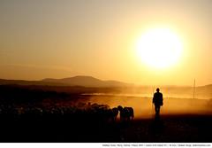 009 - edekoy (Atakan Sevgi) Tags: sunset sun turkey village sheep maritza shepherd trkiye greece bulgaria sheppard balkans herd sheeps balkan gnbatm edirne gne yunanistan maritsa balcanes hayvan bulgaristan kyl thrace koyun kuzu meri oban hayvanclk evros trakya soufli sr edeky kaddondurma balkanlar kkb herdofsheeps soflu sofulu