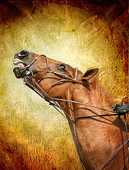 Tie me up -- Tie me down... (Isabelle Ann) Tags: horse art digital caballo cheval jumping vermont photographer digitalart dorset isabelle jumper hunter cavallo cavalo pferd equine equus paard horseshows hunterjumper lucisart mostbeautiful kriskros manchestervt dorsetvt twtme equineart vermontsummerfestival artlibre isabelleann isabelleanngreen equestrianart hunterjumpers dorsetsummerfestival equestriandel equinephotographer inspirationart hunterjumpershows artistichorse isabellegreen equitationart hunterjumperart dorsethorseshow hunterjumperphotography hunterjumprphotographer isabellegreenphotography isabelleannphotography isabelleannhorses mostbeautifulhorses equineartist hunterjumperphotographer hunterjumperphotograhy