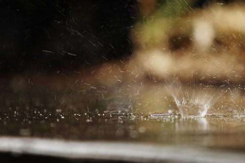 Rainy Day-005003