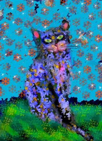 חתול 2