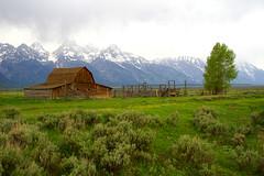 Sage Brush With Mormon Barn (helikesto-rec) Tags: mountains wyoming tetons sagebrush grandtetonnationalpark mormonbarn