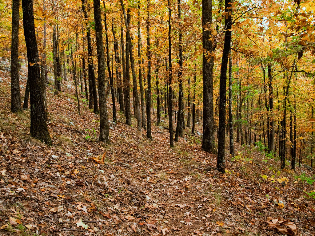 Hickory forest