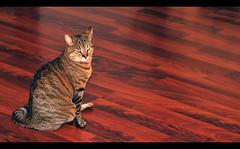 Ximena (LinoPhilippe) Tags: chile santiago cats cat nikon kitten feline chat kitty gatos gato felino katze gatto katzen kot matou chatte chaton  d60  hauskatze  felidi