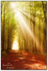 The way to Fangora ( Damona-Art ..`..`) Tags: wood morning autumn trees light sun sunlight nature colors playground forest photography landscapes lightandshadows woods nikon raw seasons belgium belgique secret magic herbst dream natura fantasy dreams mysterious mystical tervuren paths sunrays magical forests mystic enchanted sunbeams d300 bookofsecrets damona naturewatcher thesecretlifeoftrees zauberwelt