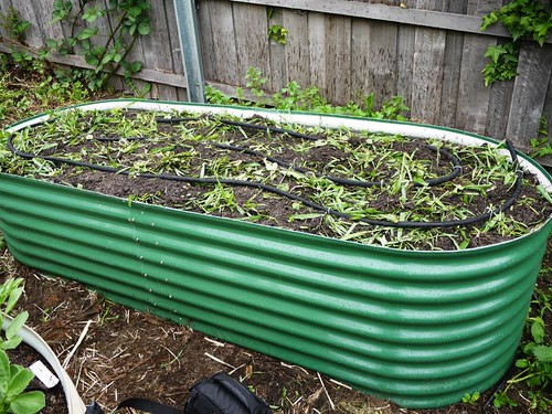 Green Manure After