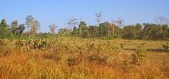 Deforestation in Siema Biodiversity Conservation Area (mke1963) Tags: forest rainforest cambodia khmer migration climatechange biodiversity deforestation siema mondulkiri