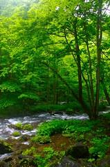 奧入瀨 ORASEI JAPAN (jacksonkuo) Tags: japan creek stream aomori summertime oirase 奧入瀨 orasei