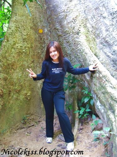 giant tree pose