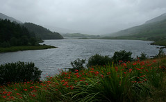 red band in the rain (george daley) Tags: wales snowdonia gwynnedd