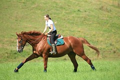 Looping du coty (jacaranda4) Tags: horse cheval mare du concours looping colt stallion francais chevaux filly selle foal cso poulain dressage jument coty complet elevage