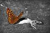 Alone In The Light (Ganymede: Photography) Tags: butterfly fly flying flies alone light dark daylight ground focus close up closeup jardin botanico jardinbotanico botanic garden gardens madrid hope rotten world nikon d60 nikond60 poet poetry poetic explore interesting interestingness