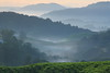 layers upon layers... (ChR!s H@rR!0t) Tags: canon highlands tea cameron plantation sg palas 24105mm 1000d