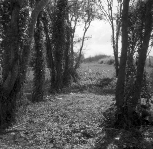 Craggy Trees