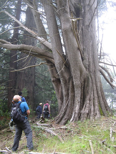 Checkout a big old tree