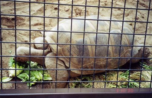 Giant Tortoise Life Span