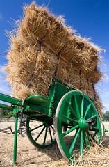 Harvesting (giusmelix) Tags: wheat grano sigma1020mm mietitura assemini superaplus aplusphoto wowiekazowie giusmelix