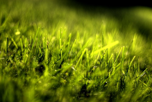 Grass | Flickr - Photo Sharing!