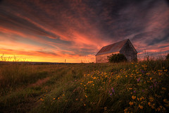 Timing (iJohn) Tags: flowers sunset field grass barn rural bravo novascotia farm country wildflowers supershot mywinners colorphotoaward wowiekazowie