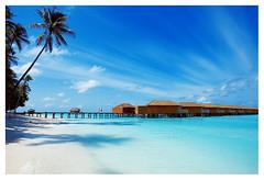 Blue 025 (yein~) Tags: ocean blue sea summer sky holiday tree beach nature digital canon landscape island landcape maldive seabeach blueribbonwinner mywinners abigfave fiveflickrfavs