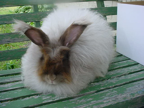 Woolybuns Snickers