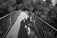 Great Falls 2 (Oblivious Dude) Tags: blackandwhite bw md greatfalls maryland tokina1224 dcist 123bw notstreetstreet